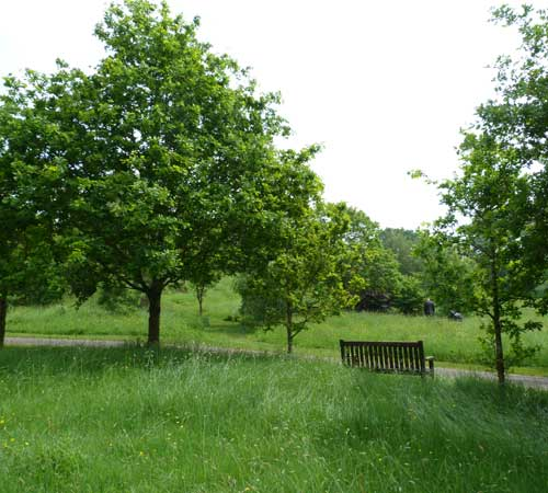 View of countryside with trees and bench.